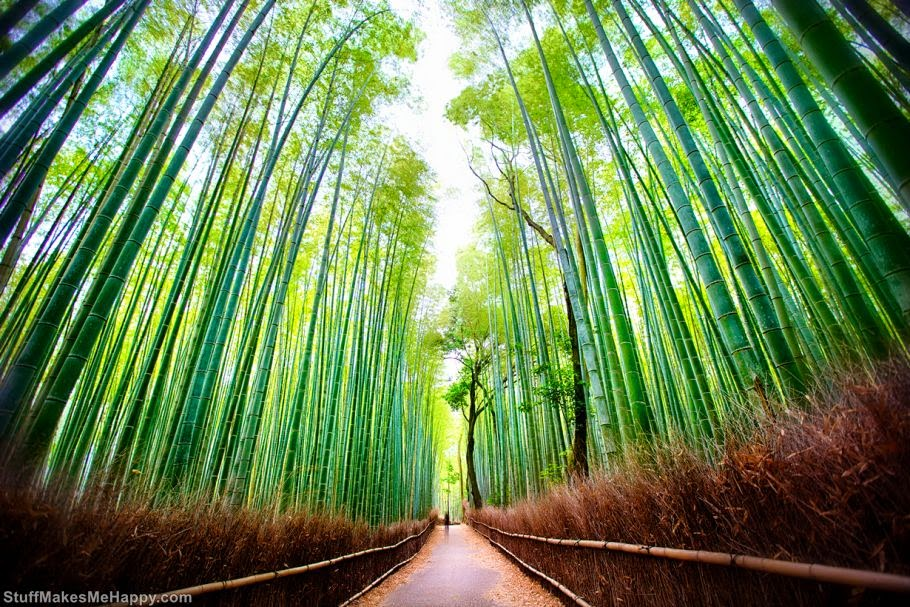 Sagano bamboo forest, Kyoto, Japan (Photo by Daniel Peckham)
