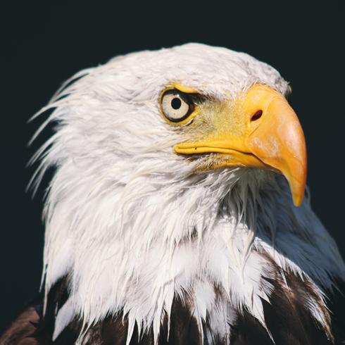 Alberta Birds of Prey Foundation