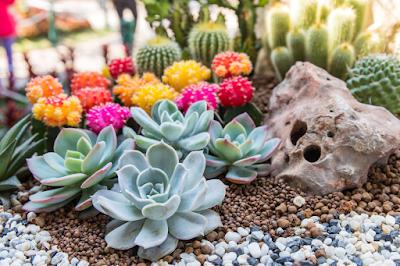 Kalanchoe Bloom on gravel
