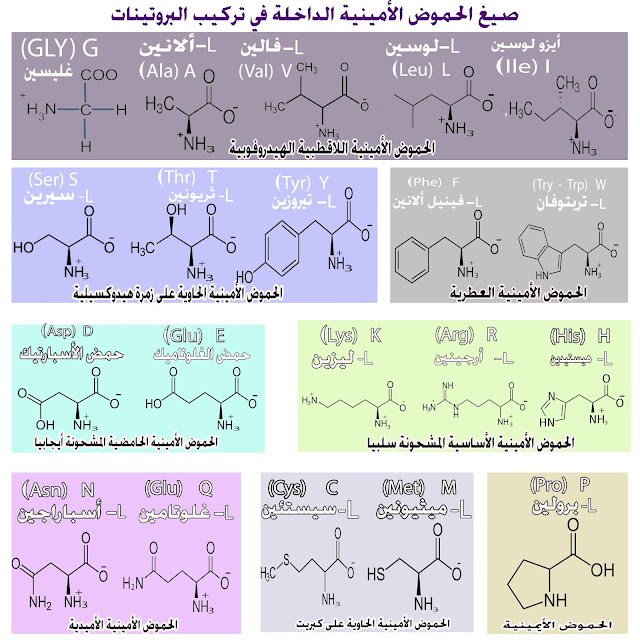 أسماء الأحماض الأمينية العشرين الداخلة في تركيب البروتينات