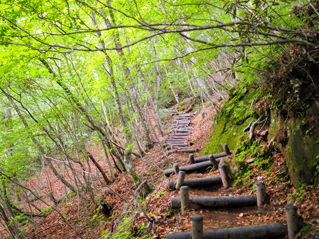 西沢渓谷 歩道 階段