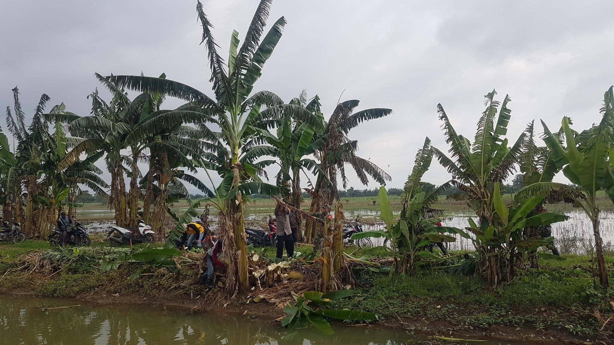 Antisipasi Banjir, Lambiran Sungai Gandongan Dibersihkan