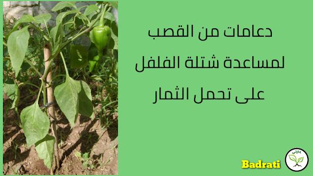 زراعة الفلفل والباذنجان