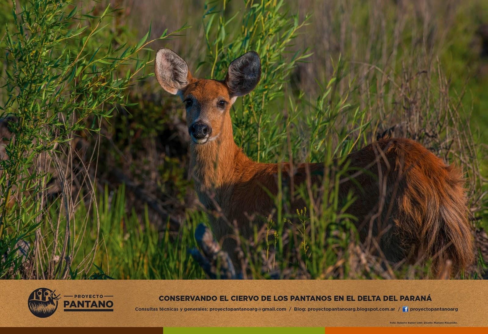 Proyecto Pantano Argentina