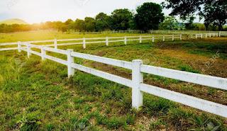 Fences | Rani Rathna Prabha K V