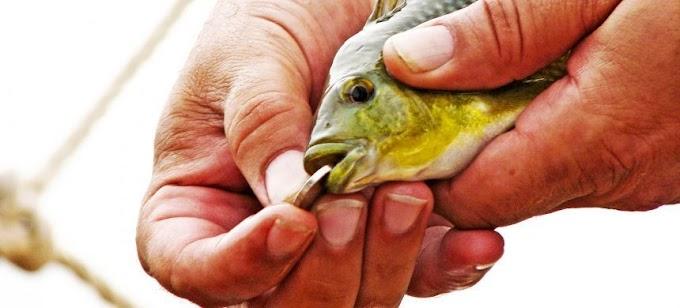 La moneda en la boca del pez, ¿leyenda o historia verídica?