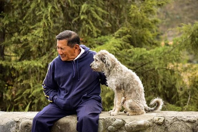 Cómo cuidar a un perro anciano
