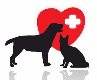Seu cachorro muito amado se envenenou. Seu gato muito querido se machucou feio numa briga. O que fazer para prestar os primeiros-socorros a eles? Veja as orientações de veterinários e criadores para socorrer seu animal de estimação em uma emergência: