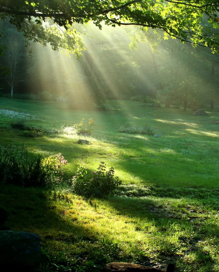 Beautiful Nature Girl Wallpaper: Image Gallary 1: Beauty Of Nature During Sunshine Pictures