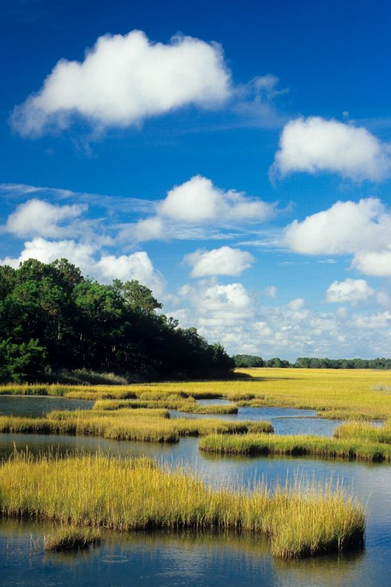 Salt marsh in James Island, South Carolina