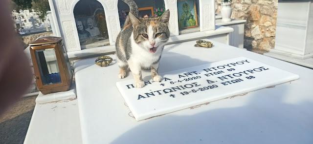 Παράλιο Άστρος: Ένα γατάκι δεν φεύγει από το μνήμα των ανθρώπων που το φρόντιζαν (βίντεο)