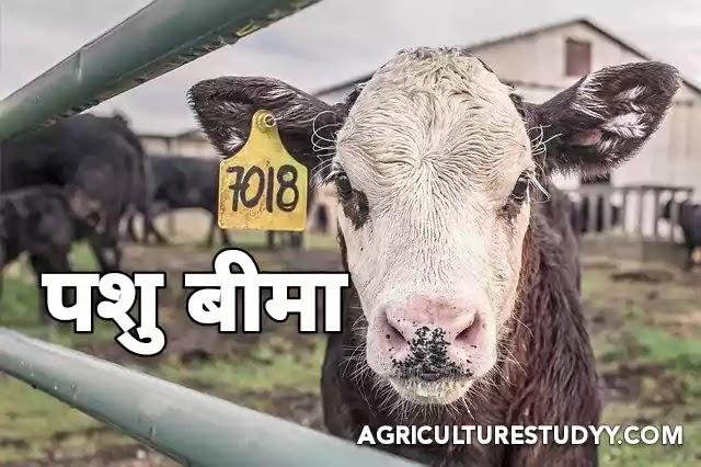 पशुधन बीमा योजना की जानकारी ( Cattle Insurance scheme in hindi )