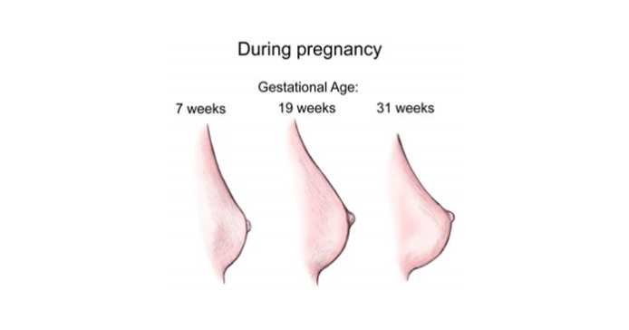 Breasts During Pregnancy - Natural Breast Enlargement-9142