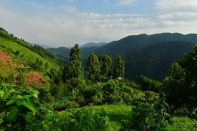 Bwindi Impenetrable National Park: The Complete Guide