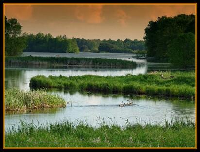 Wetland,small water land,nature,natural kidney.