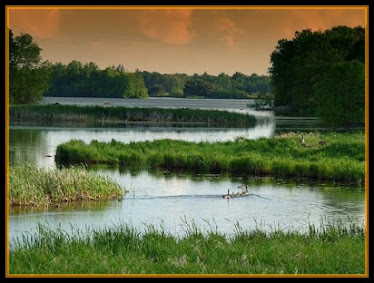 Wetland,small water land,nature,natural kidney.