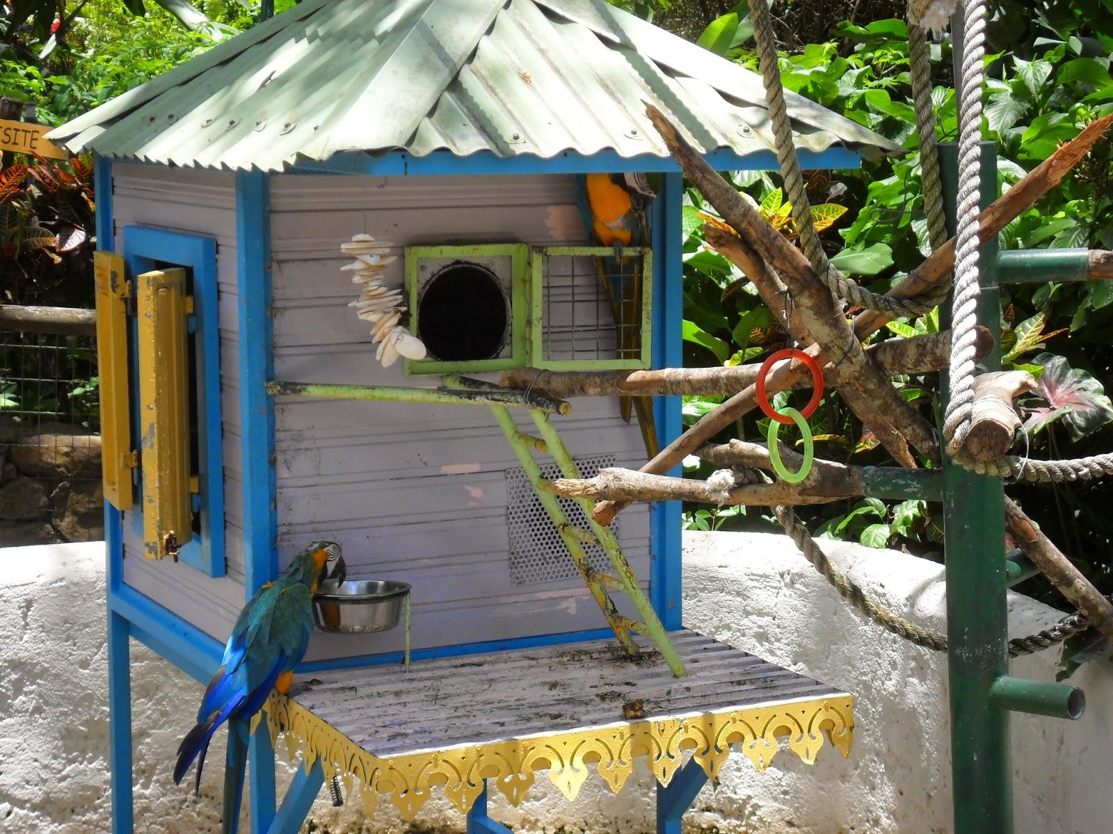 Perroquet dans le Jardin Botanique