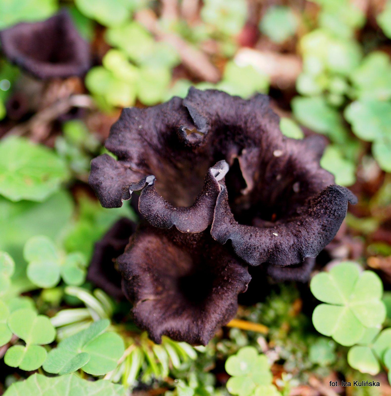 Duże czarne kurki rurki