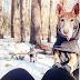Πόσο κρύο θεωρείται πολύ για τον σκύλο;....
