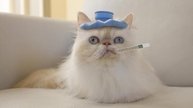 7 Cara Ketahui Kucing Deman Atau Tidak