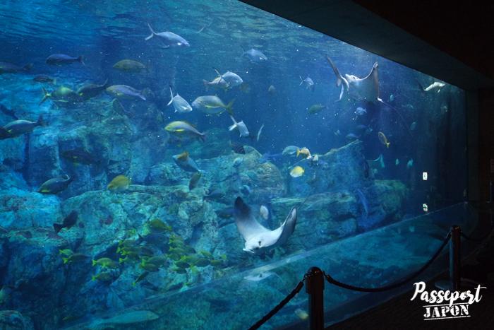 Grand aquarium, Umi Tamago, Oita