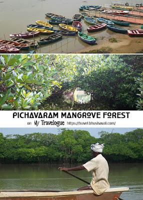 Pichavaram Mangrove Forest Pinterest