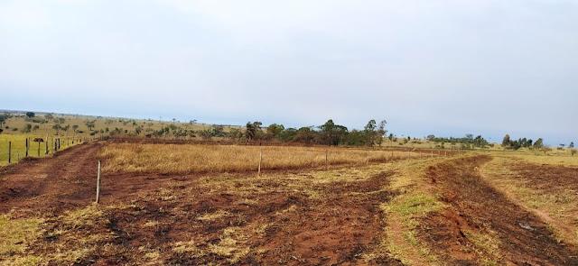 Proprietária de sítio é autuada em quase R$ 20 mil por uso de fogo em área agropastoril e queimada de 34 árvores