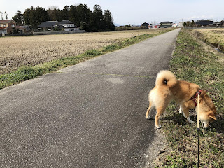 北東方向から見た刀尾神社と柴犬ゆき富山市