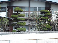Cloud-pruned trees, typical landscaping in Japan
