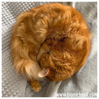 Colouring with Cats ~ Getting Your OM on with Mandalas on Mondays ©BionicBasil® Cinnamon Role Fudge