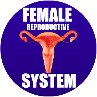 female reproductive system in spanish