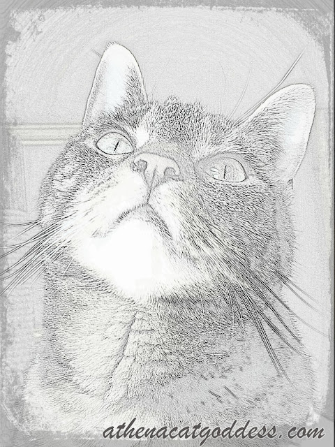 caturday art sketch