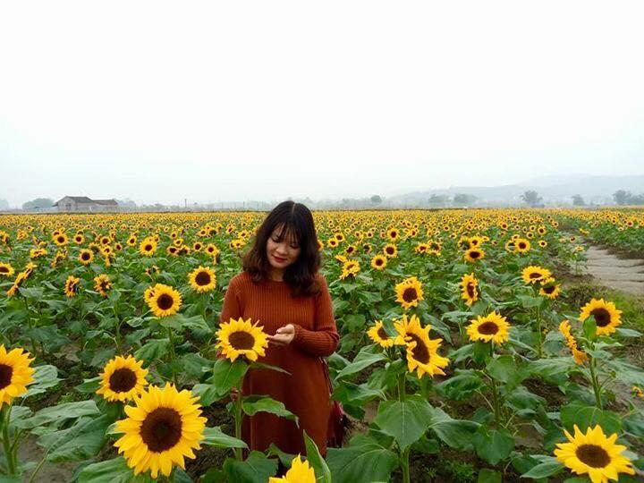 Giới trẻ 'phát sốt'' với vườn hoa hướng dương tại Bắc Giang -6