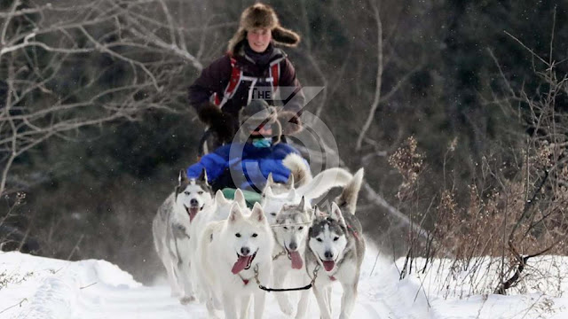 Dog sledding enthusiast