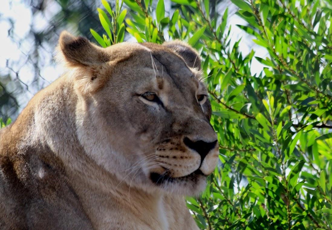 Yakima zoo