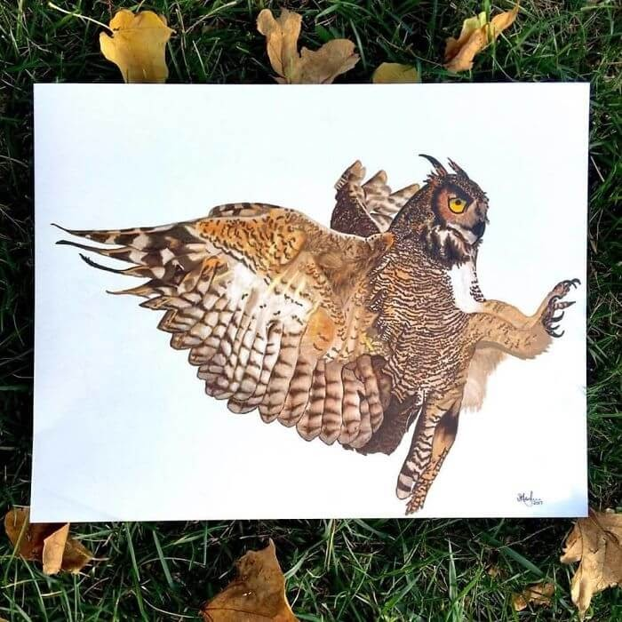 02-Great-Horned-Owl-Shannon-Mayhew-Drawings-by-Domestic-and-wildlife-Animal-Artist-www-designstack-co