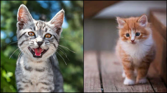 अशुभ-गतिविधियों-से-बिल्ली और इन-animals12
