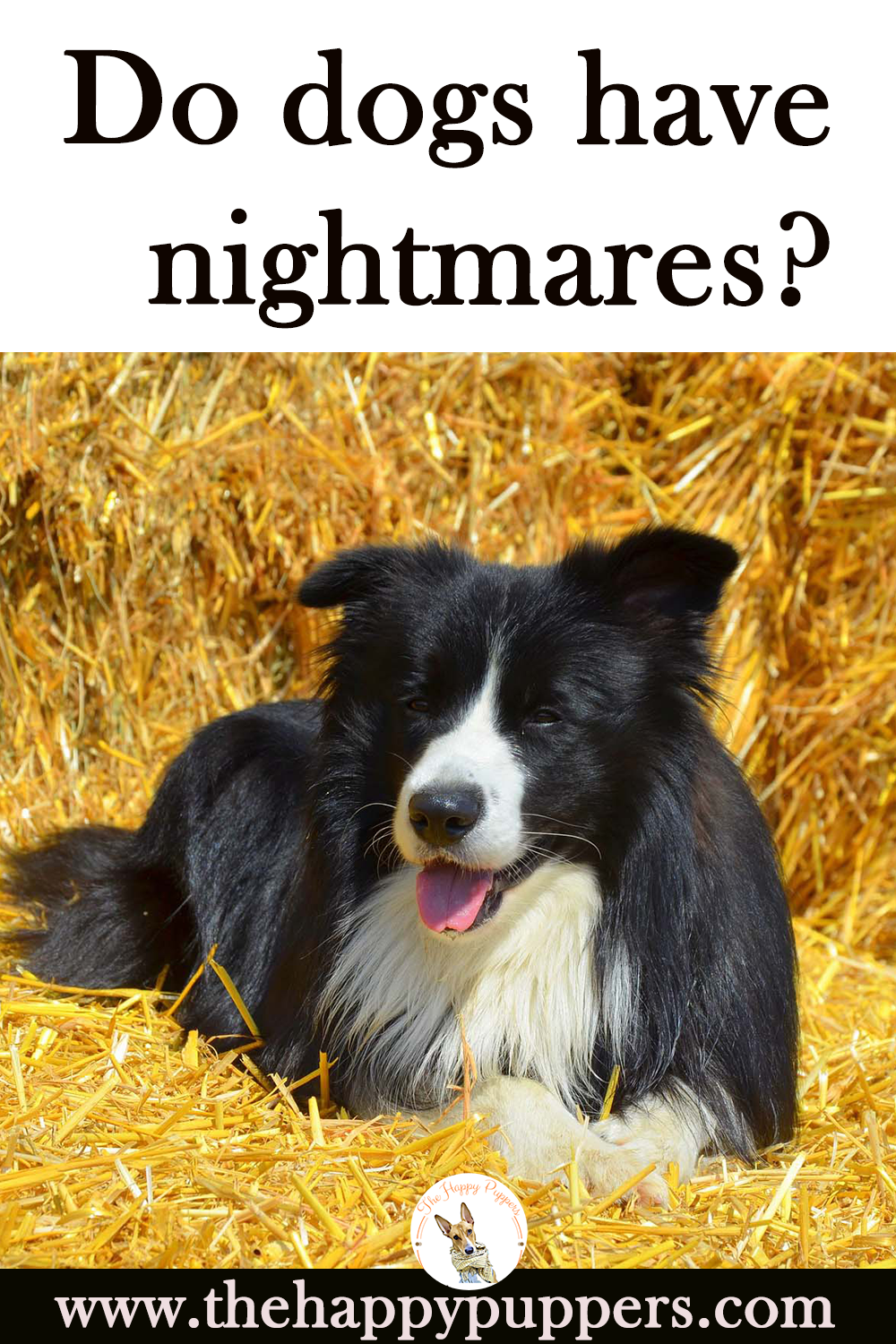Why dogs have nightmares and how to help