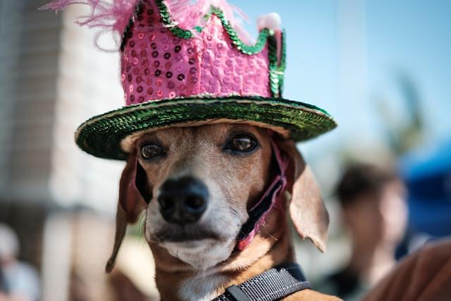 O bloco dos cães desfilou ontem (19/02), mas retorna ainda nesse carnaval, confira aqui:
