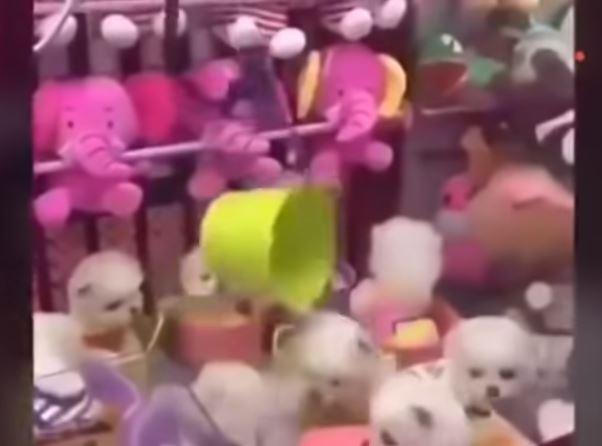 Viral Sebuah Mesin Capit di China Berisi Hadiah Anak Anjing, Hal Tersebut Membuat Pecinta Anjing Marah