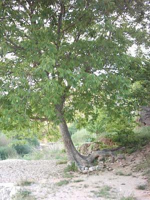 azud, assut, Matarraña, Matarranya, Beceite, Beseit , pared, nogal
