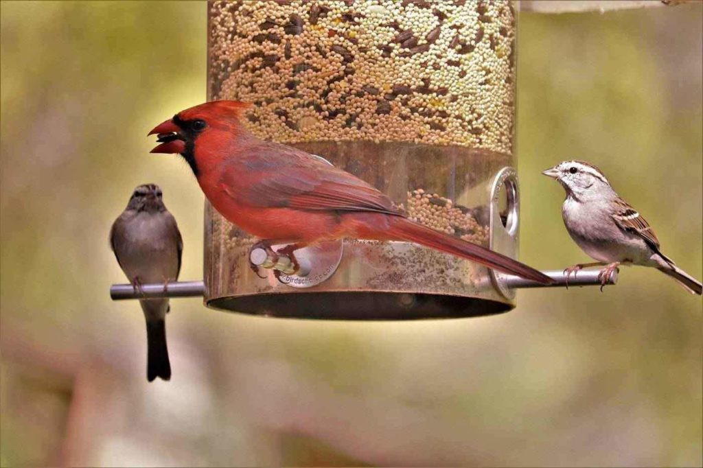 Best Bird Feeders of 2020 - Reviews and Buying Guide
