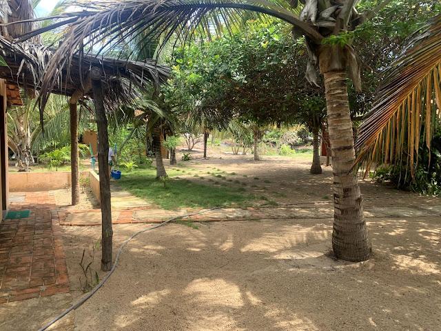 area arborizada verde
