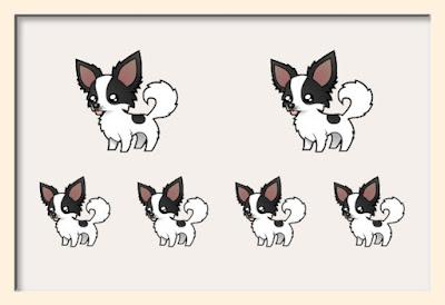 chihuahua, genetica pelo largo