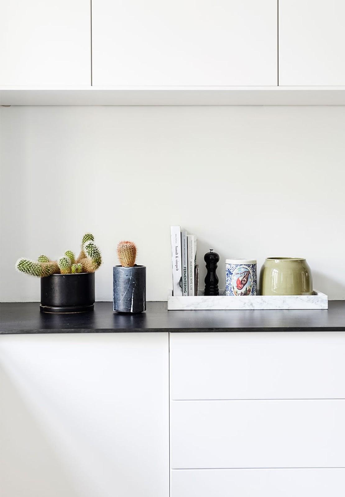 cactus, minimalist kitchen