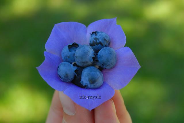 dziecięca przekąska, jadalny dzwonek brzoskwiniolistny, działkowy deser, jadalne kwiaty, przepis borówka amerykańska, edible flowers