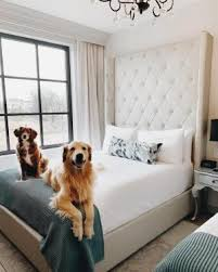 cama hotel pet friendly
