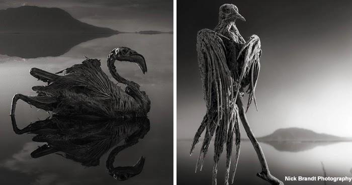 Lake Natron ― A Lake That Turns Animals To Stones