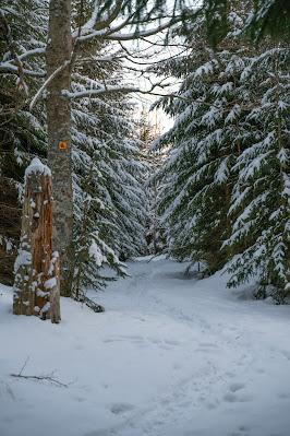 Rundweg Kreuzotter | Hochmoor Filzwald / Kloster Filz | Nationalpark Bayerischer Wald 09