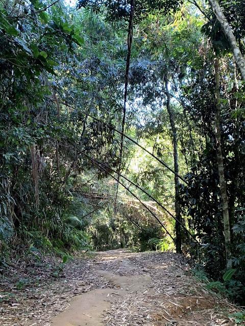 trilha demarcada em meio a mata de Paraty no rio de janeiro